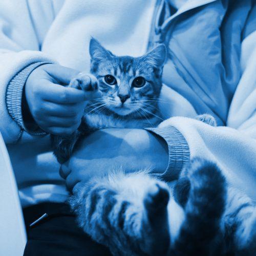 pet medication copy